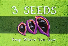 3 seeds game box